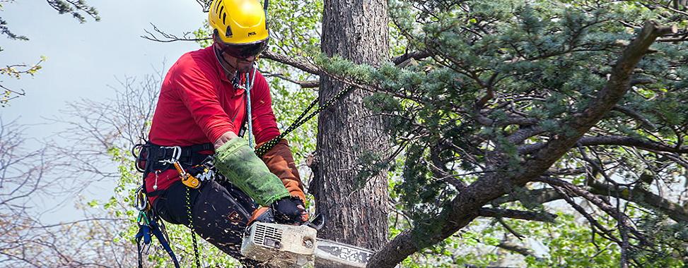 Зрізання та видалення дерев. Лодзь.